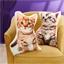 Kussen kitten Rood, Grijs or set van 2
