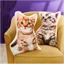 Kitten shaped cushion Ginger, Grey of set of 2