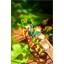 Photophore papillon