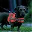 Rood hondenharnas