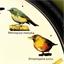Horloge musicale oiseaux