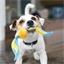 Hondenbal met oren