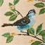 Zetelkussen vogels