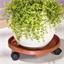 Plant pot caddy on castors