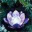 Poederroze lotus op zonne-energie