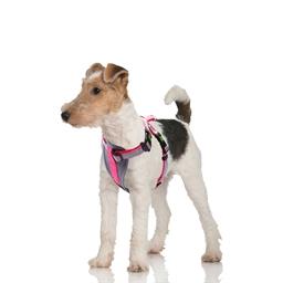 Comfort dog harness Pink or Blue