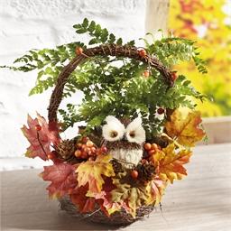 Owl Autumn Basket