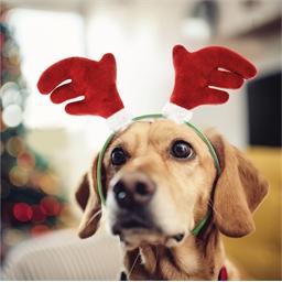 Rentier-Kopfschmuck für Hund