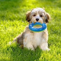 Cooling ring toy
