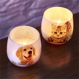Perfumed candle Cat or Dog