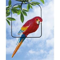 Papegaaienhanger