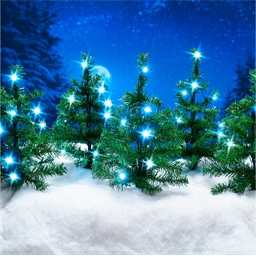 5 outdoor LED Christmas trees