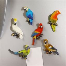6 Magneten Papagei