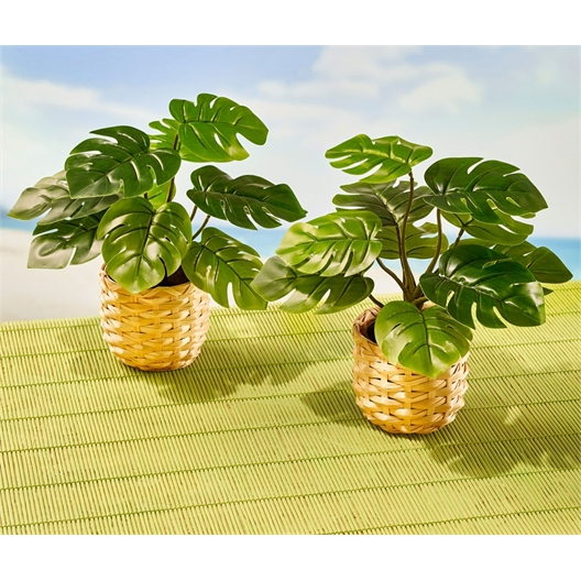 Tropical plant or set of 2