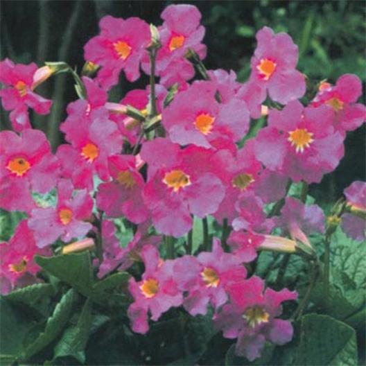 2 Set of Mole Repellent Plants by 2