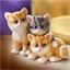 3 kittens met bewegingssensor
