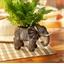 Sierpot olifant