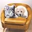 Kissen getigerte Katze oder Labrador oder 2er-Set