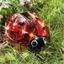 Maxilieveheersbeestje met zonnecel