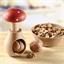 Casse noix champignon