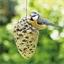 Nourriture oiseaux pomme de pin géante